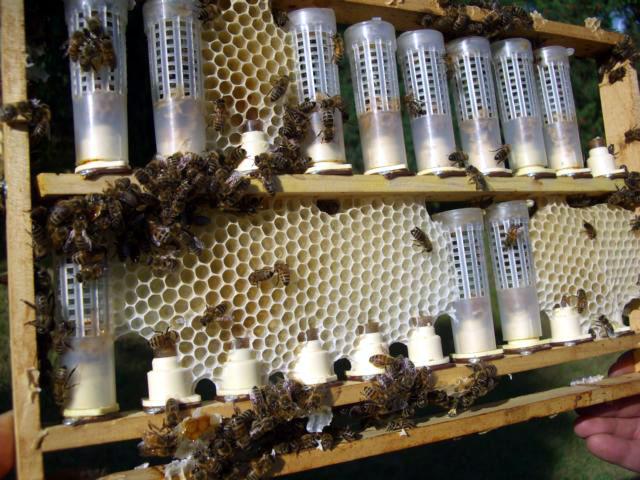 Bienenzucht 5