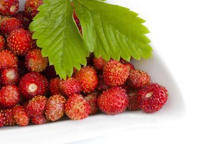 Kleine und unregelmäßige Erdbeeren ohne die Bestäubung durch Honigbienen